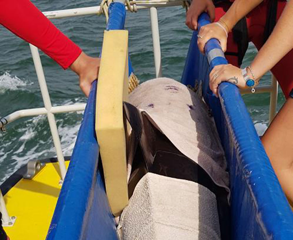 Maushami Chetty On Inspiration Adventure: Beached Dolphin Rescued
