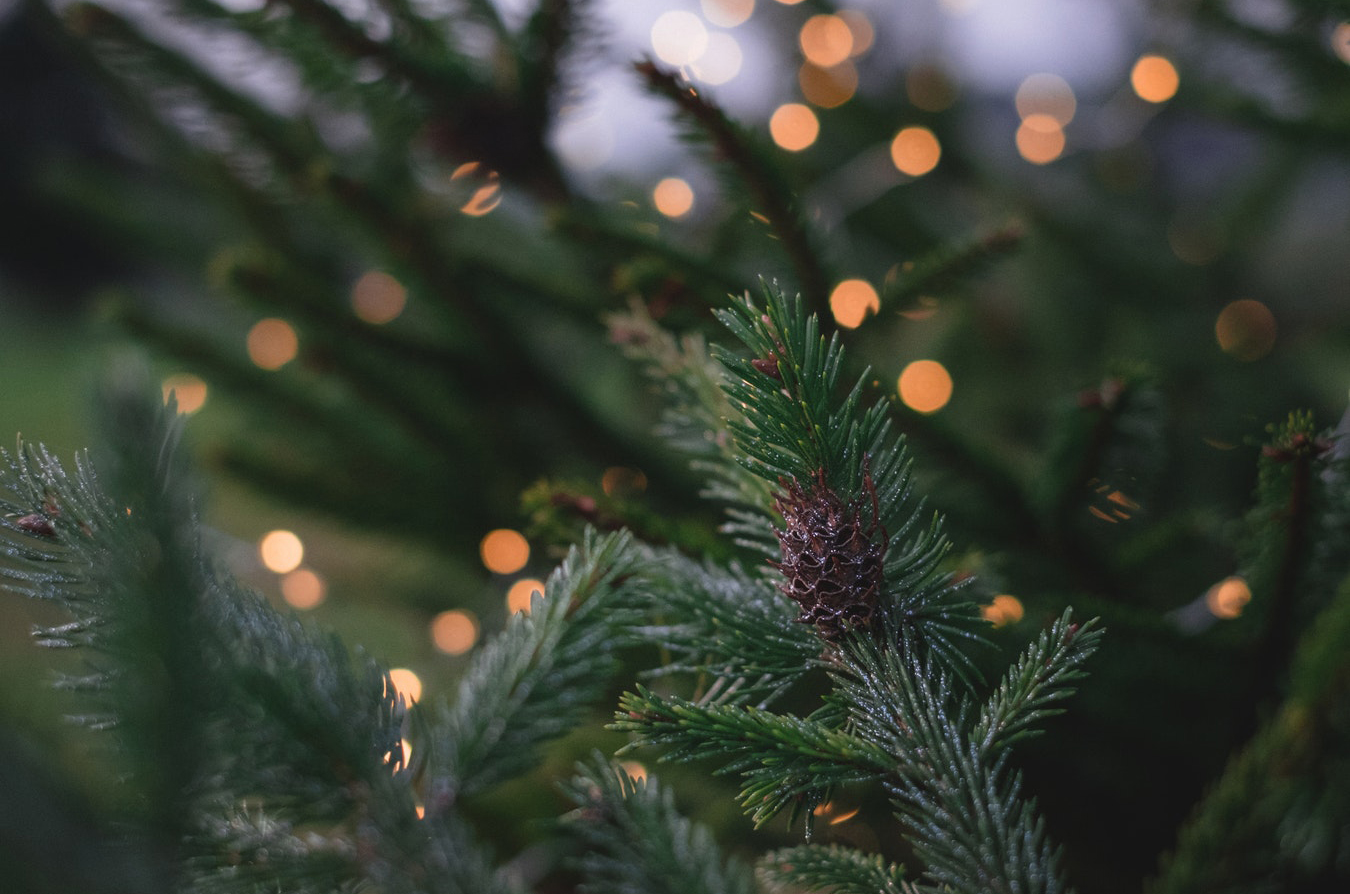 Taking down your Christmas tree – the green way
