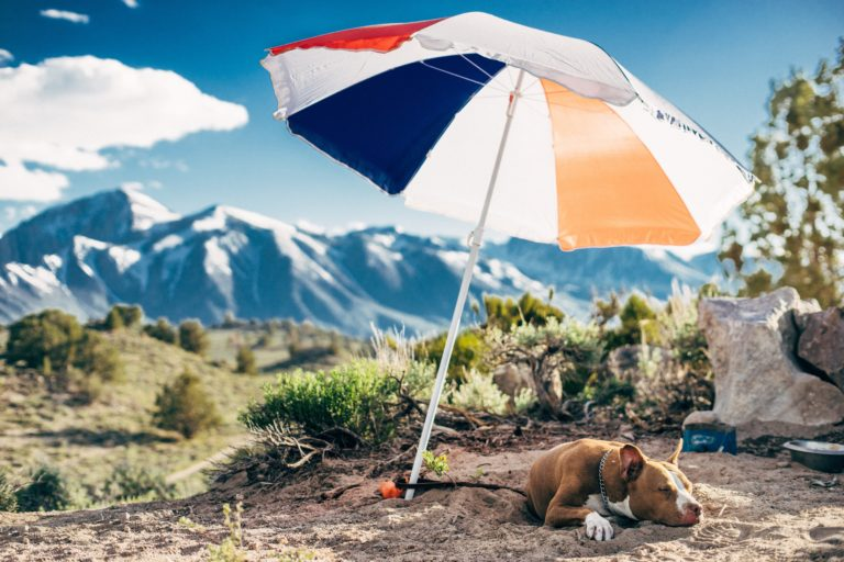 Flying with Fluffy: pet air travel in SA
