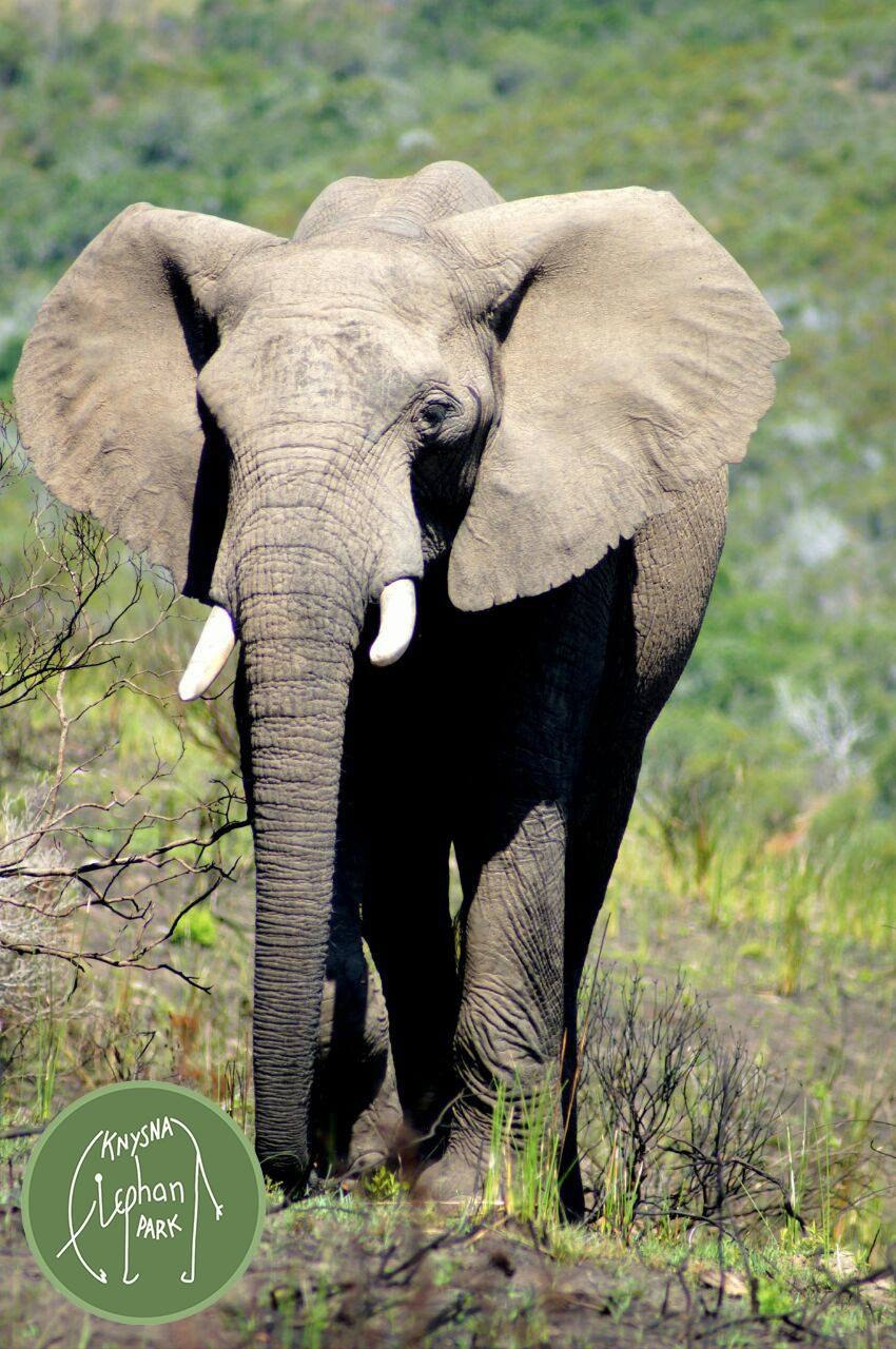 First circus elephant re-wilded in SA  First circus el...