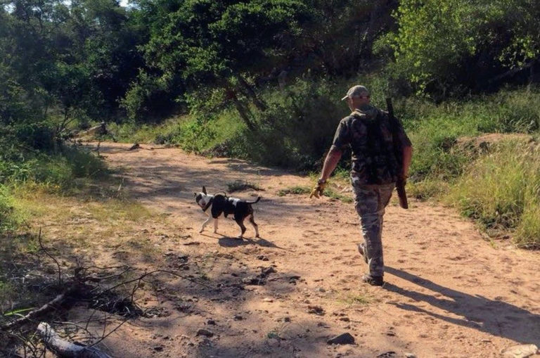 Pepper on patrol in a private nature reserve bordering Kruger. Image: Pepper on Patrol/ Facebook.