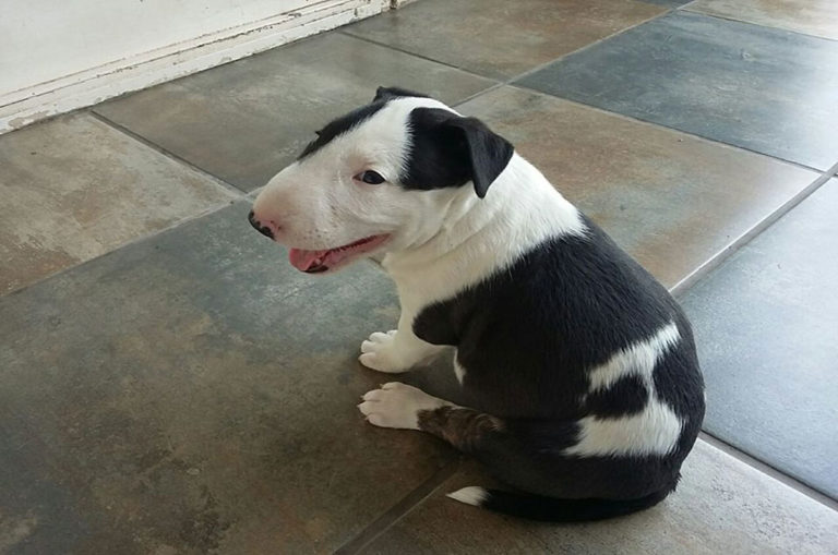 Pepper arrived at the Kruger lodge as a puppy. Image: Pepper on Patrol/ Facebook.