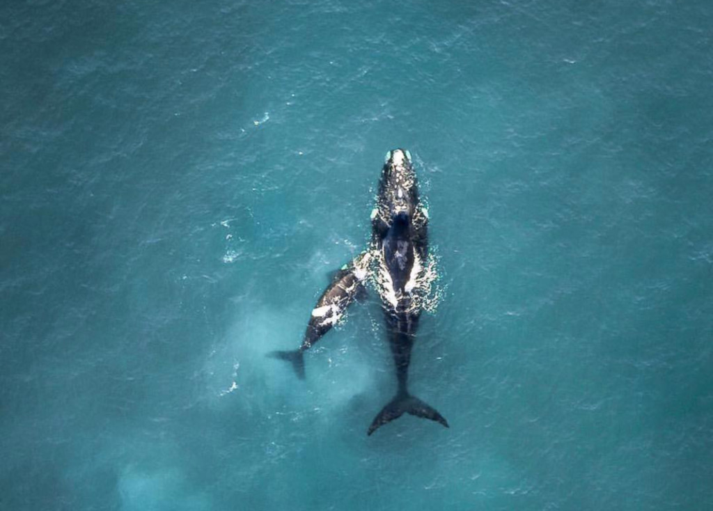 Maushami Chetty On Inspiration Adventure: Hermanus Named Best Whale Watching Spot In The World