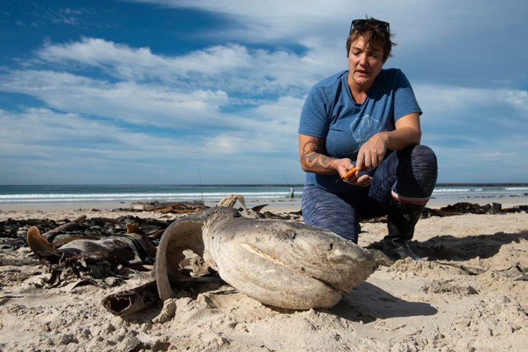 Five dead sharks wash up in Betty's Bay