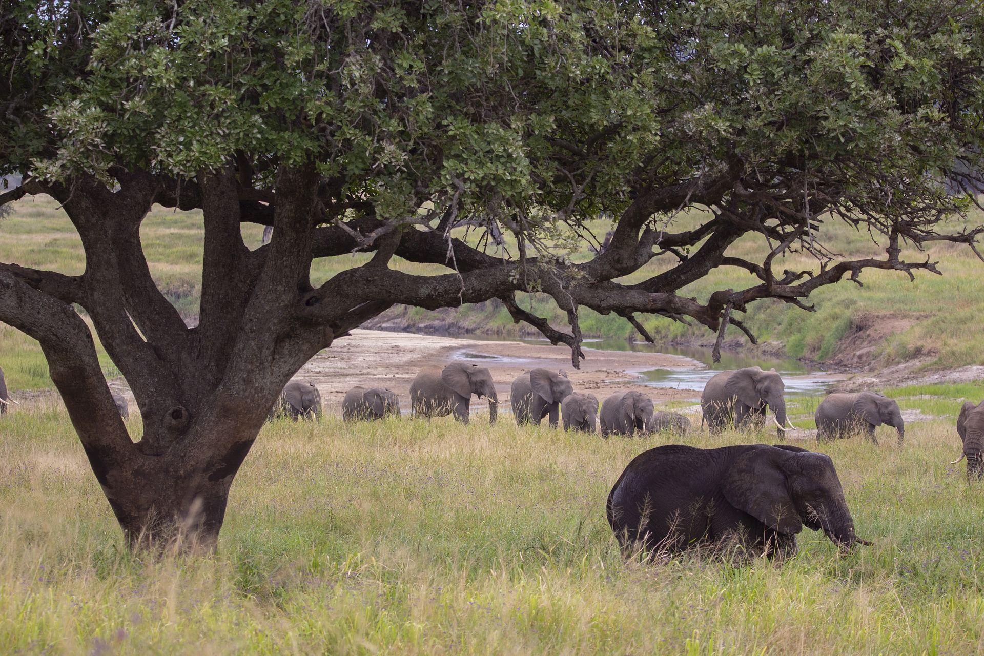 Bees tell raucous elephants to buzz off