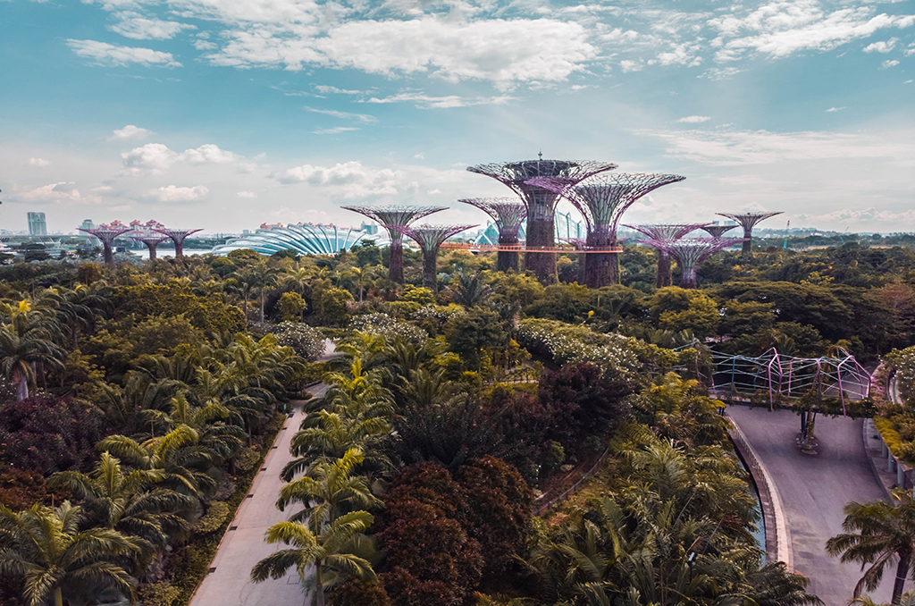 6 cities around the world home to urban forests