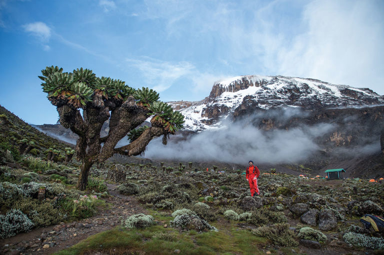 After a lunch stop at Lava Tower (4 600 metres), hikers descend 600 metres to the Barranco Camp where giant groundsel trees dot the landscape. Image: Matthew Sterne.