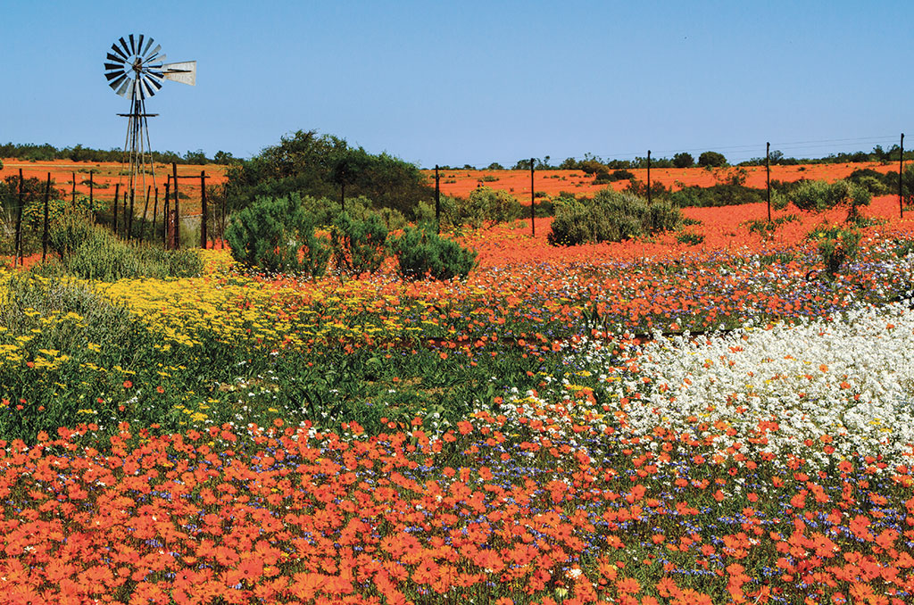 Namaqualand, one of Africa's best natural wonders