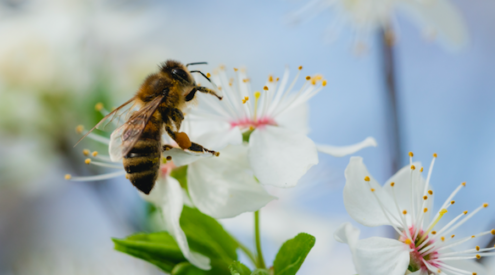 bees declared Earth most important species