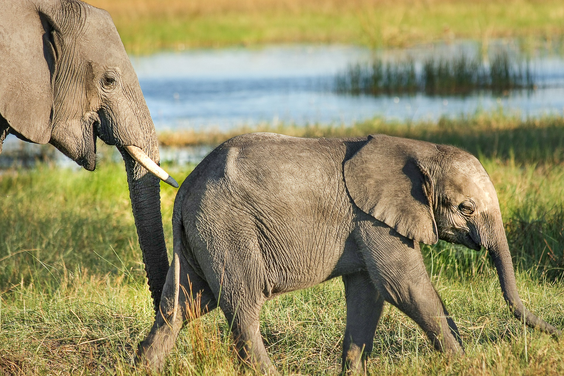 Vote to end export of wild-caught African elephants to captivity