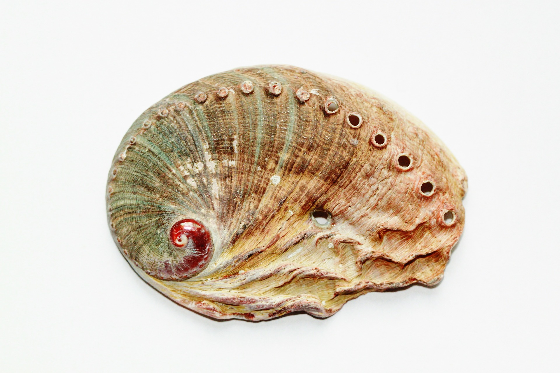 Abalone conservation to feature on Royal Tour of SA