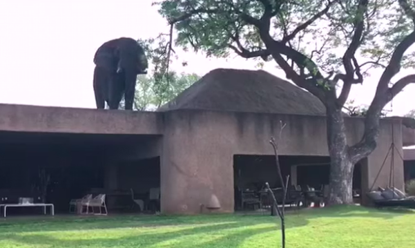 There's an elephant on my roof