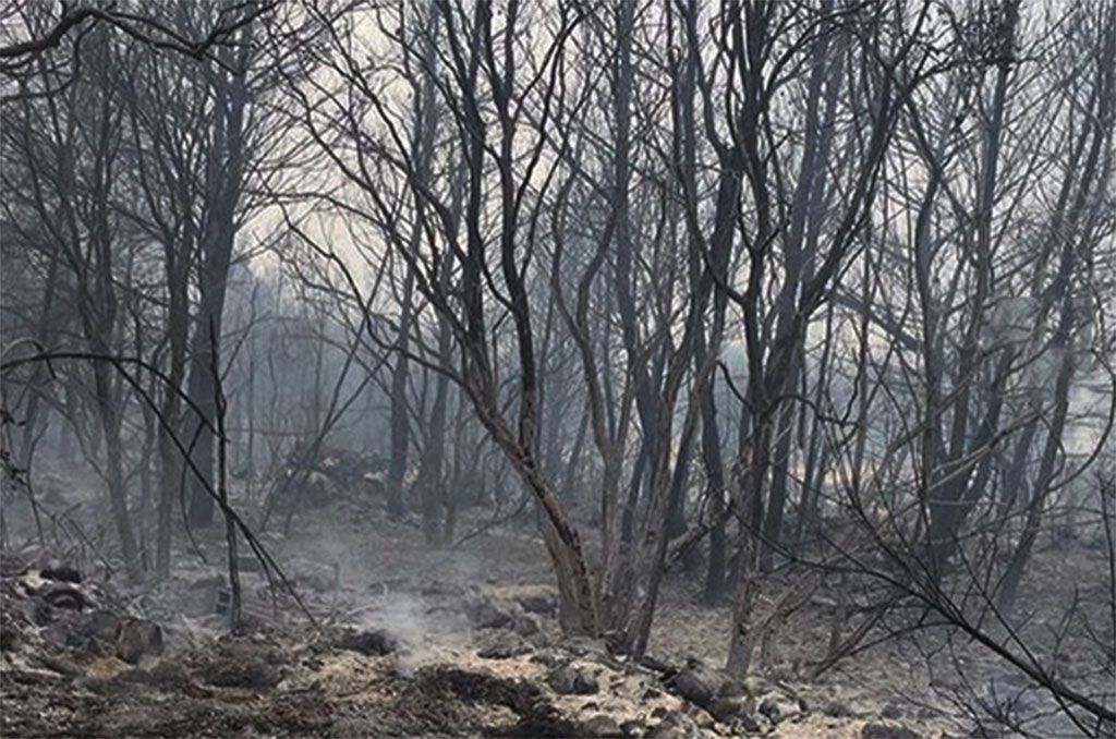 Lebanon loses masses of forest in devastating wildfires