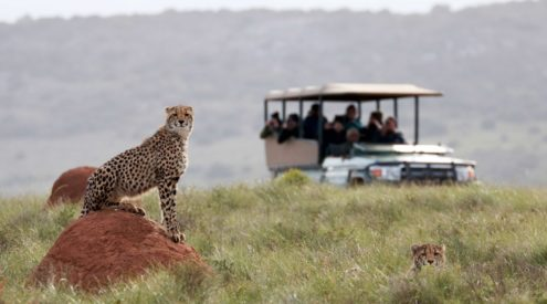 Amakhala Game Reserve, Eastern Cape, Horse Safari, lodge