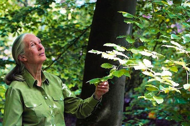 Jane Goodall's warning for humanity