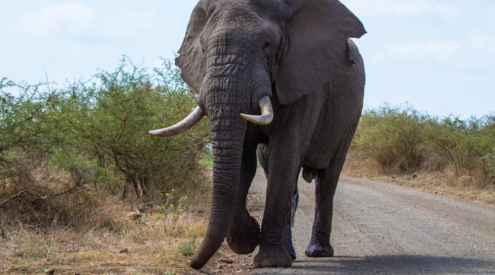 Kruger National Park driving routes: The south