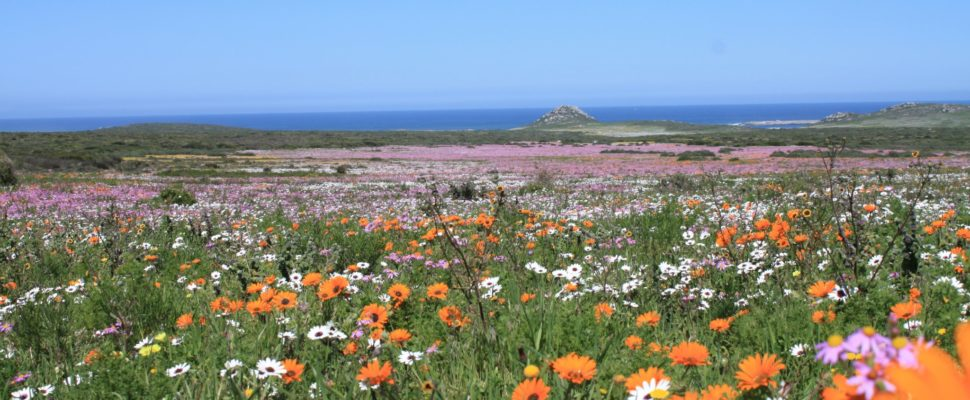 Get ready to view the West Coast's spring flowers