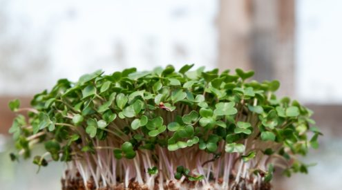 How to grow your own micro-greens