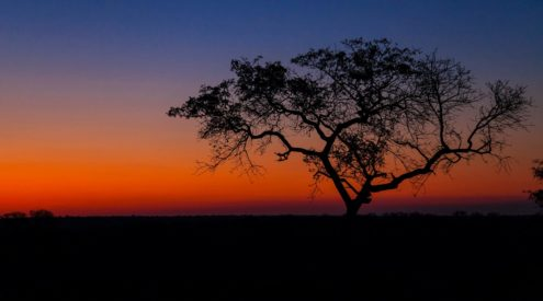 There's no sunset like a Kruger sunset