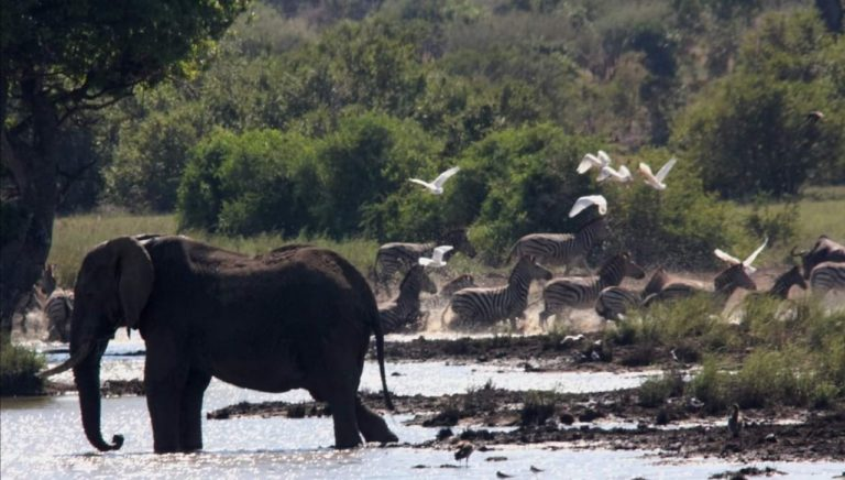 KNP overnight visitors reminded to book within province