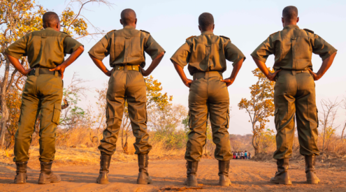 Akashinga: All-female unit combating elephant poaching in Zimbabwe