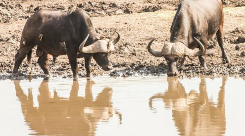 Kruger visitors join in storytelling challenge