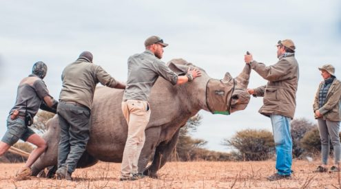 Marataba Conservation Camp opens in Waterberg