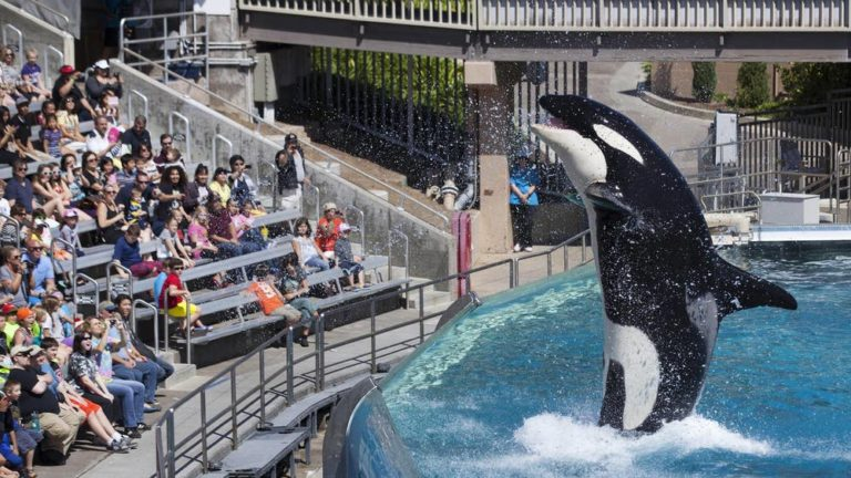 France bans use of wild animals for entertainment