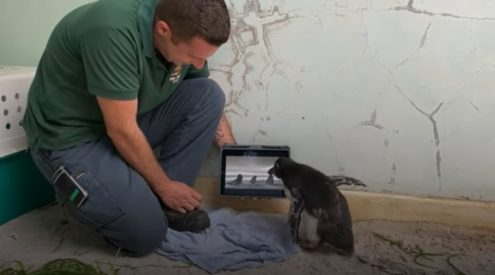 Injured penguin watches doccies in isolation