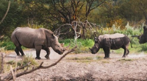 Integrated wildlife zones created to protect rhinos