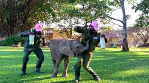 Animals join in dancing at Zimbabwe wildlife orphanage