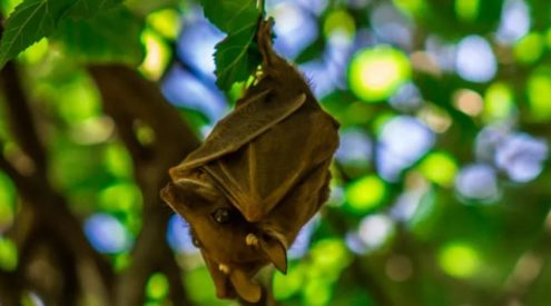 Female bats brave risky conditions for their young