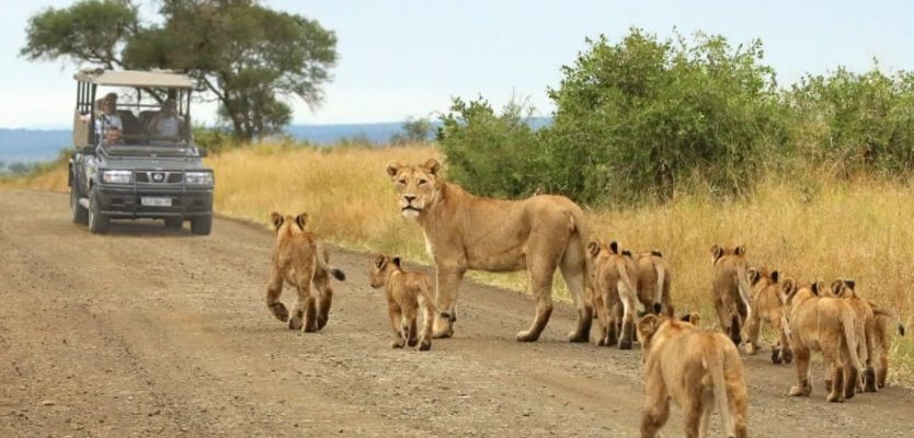Kruger visitors urged to stay on designated paths