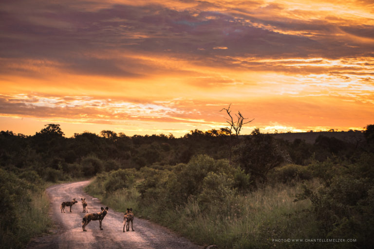 Wildlife ACT welcomes South Africans into its projects