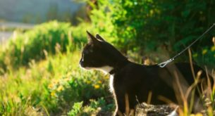 Hiking gear for cats and dogs