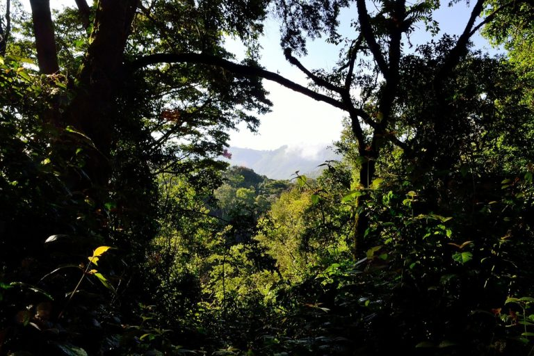 Uganda to plant 3 million trees with reforestation project