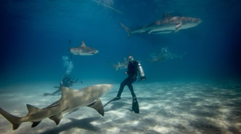 Join a virtual dive to aid shark conservation in South Africa