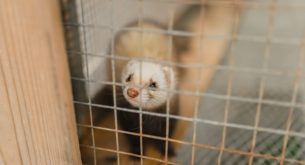 Hungary bans fur farming of mink, ferrets and more