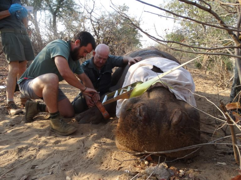 UKZN hippo research team receives generous donation