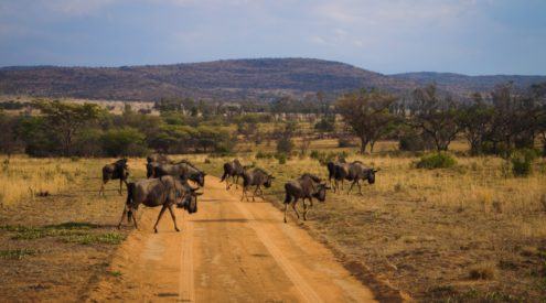 More than just bushveld: Get to know Limpopo