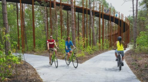Cycle through the trees in Belgium