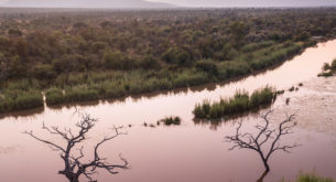 A wild renewal in the Waterberg