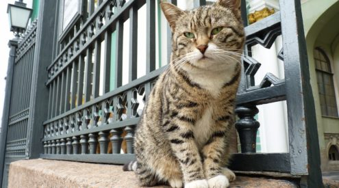 French philanthropist bequeaths money to Hermitage Museum cats