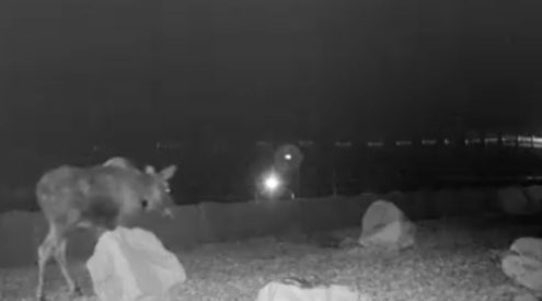 Utah animal rush hour caught on camera
