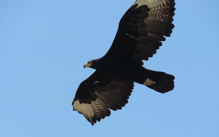 Finding space for both wind farms and eagles in South Africa