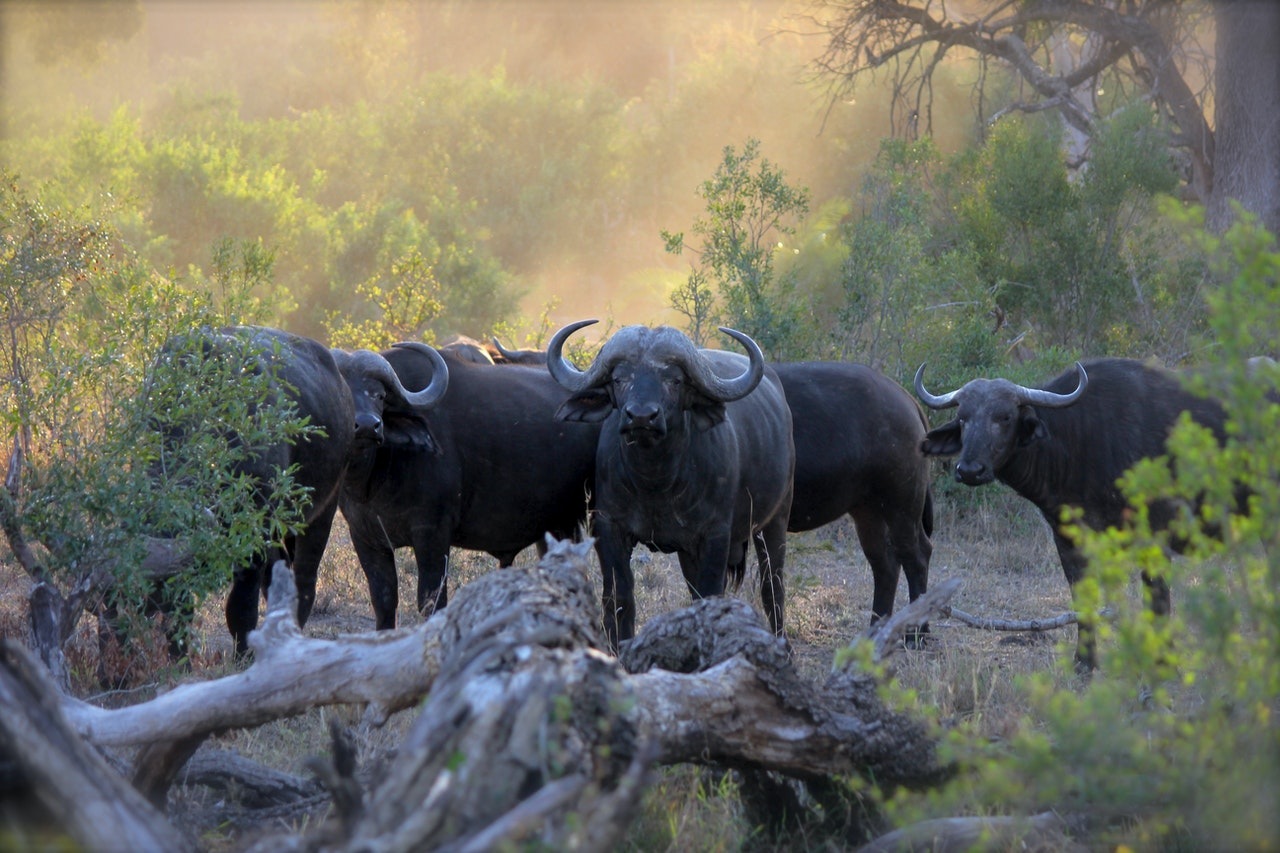 Get your safari fix with these live webcams