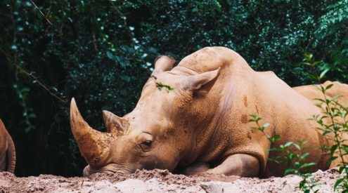 Vietnam Airlines joins fight to reduce rhino horn consumption