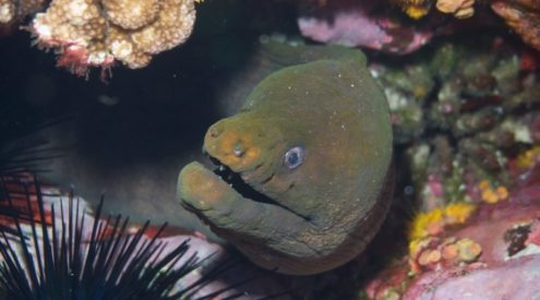 Human impacts leave reefs short on sharks and long on moray eels