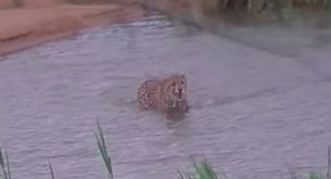 How the animals dealt with the floods in Kruger National Park