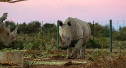 Are private rhino reserves the last hope?